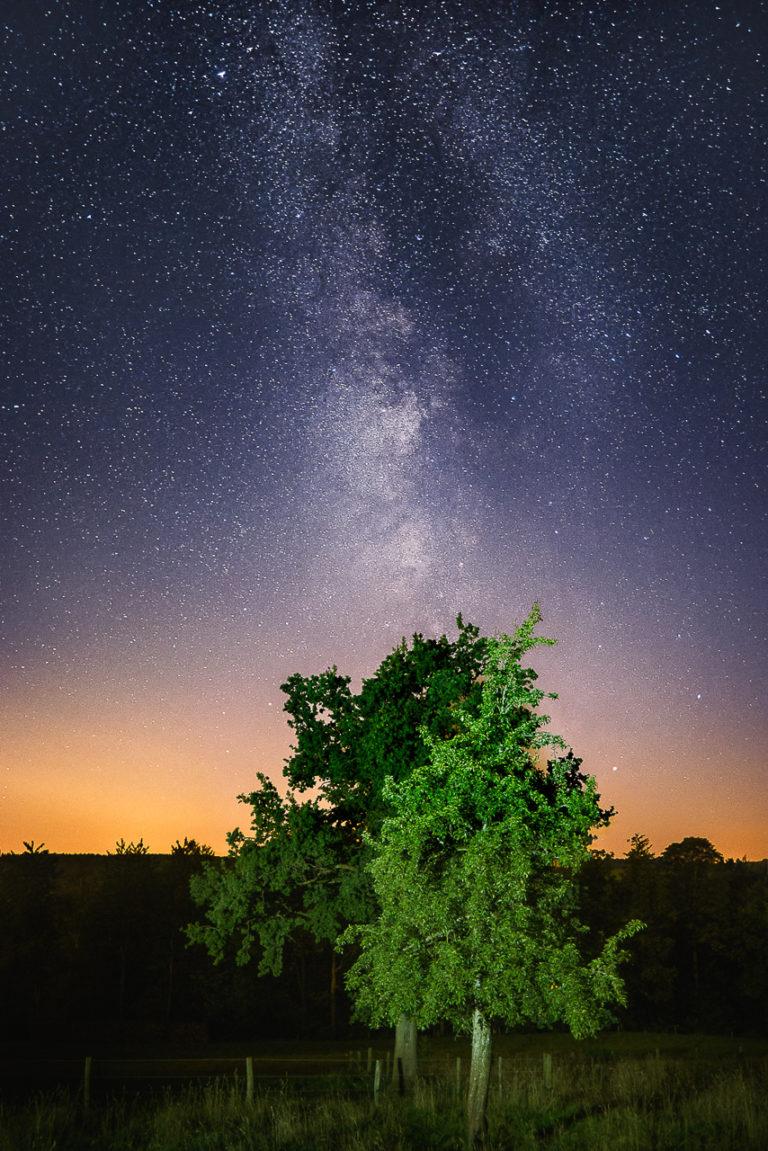 De Melkweg met een boom op de voorgrond