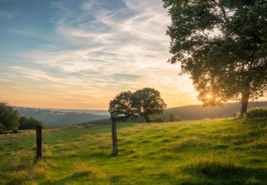 Gentle Fields